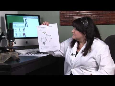 Human Physiology : What Is Adenine?