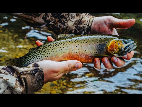 Fly Fishing Idaho's Back Country   Over Night Camping