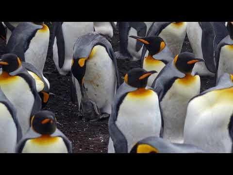 Chapter 4 The Falkland Islands & Volunteer Point