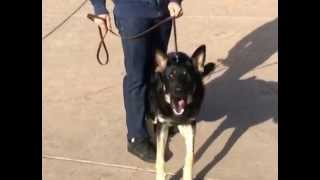 Aggressive  German Shepherd. Stop Aggressive Behavior