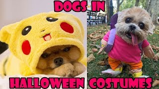 Funniest Dogs in Costumes 2019 (Funny Pets)