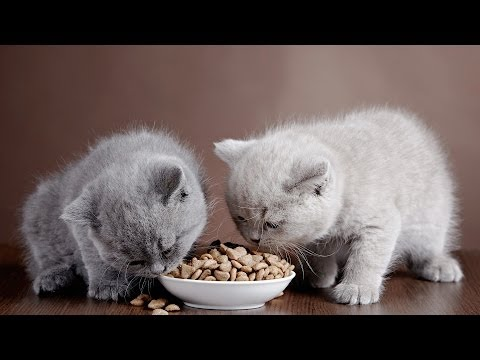 Dry Cat Food vs. Wet Cat Food | Cat Care