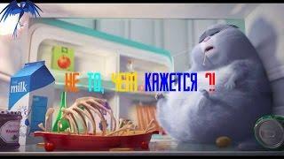 Обзор мультфильма Тайная жизнь домашних животных.