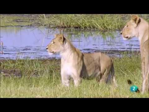 Parque Natural Africa| Documental