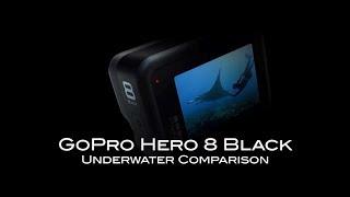 GoPro Hero 8 Underwater