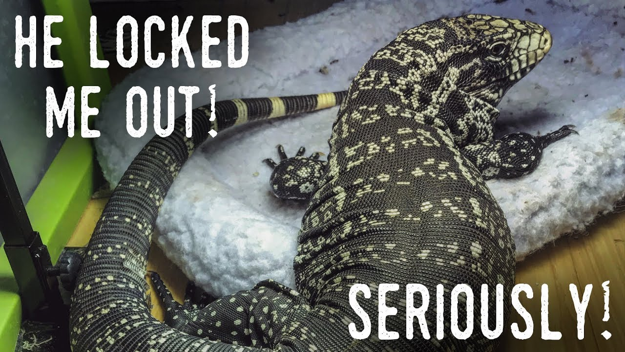 My TEGU LOCKED ME OUT of my Own Reptile Room!