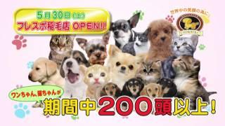 2015/05/30,ペットショップCoo&RIKU稲毛店がグランドオープン♪ ワンちゃ...