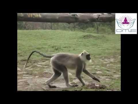Amazing Sights Of Wildlife