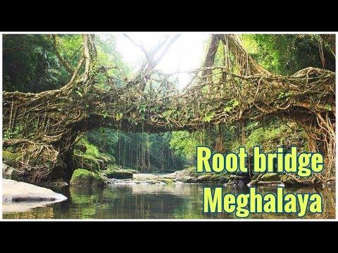 Natural Living Root Bridge of Cherrapunji in Meghalaya | India Video