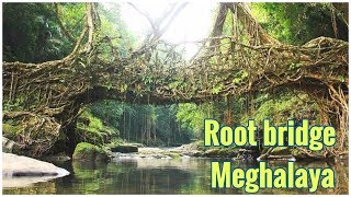 Natural Living Root Bridge of Cherrapunji in Meghalaya