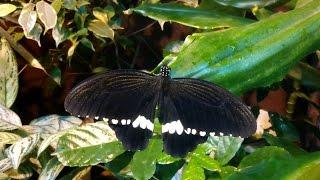 Музей Сад Живых Бабочек  -Миндо-(, 2015-11-25T17:49:52.000Z)