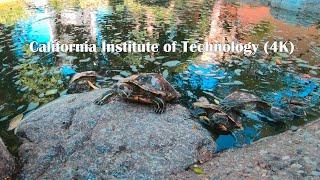 A walk along  California Institute of Technology  in Pasadena (4K)