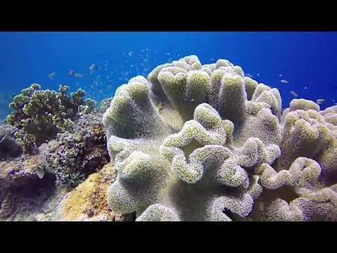 C.O.R.A.L - Conservation of Ocean's Resources & Aquatic Life
