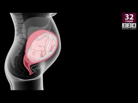34 tydzień ciąży (32 tydzień od zapłodnienia)