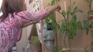 Vegetable Gardening #3: Maintenance Tips & Tricks
