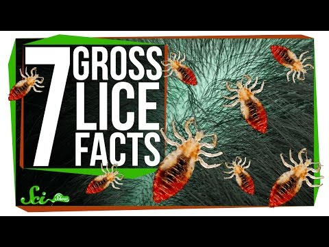7 Things You Probably Don't Want to Know About Lice