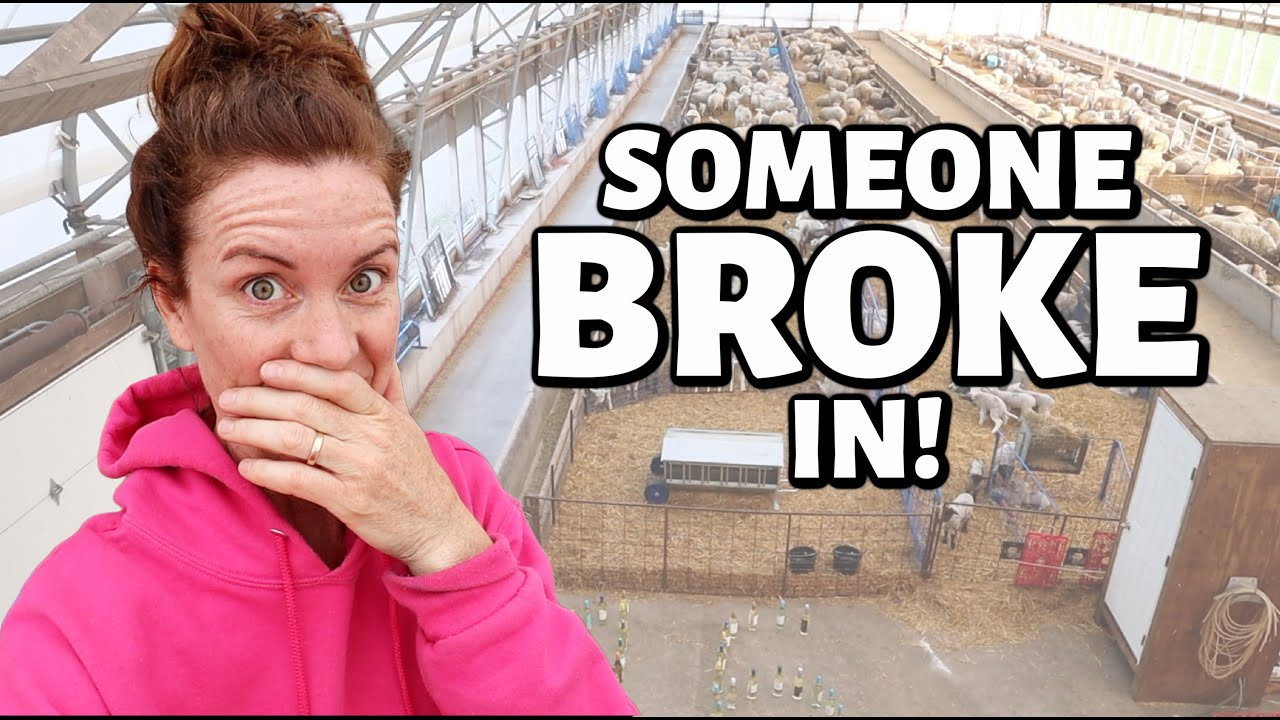 SOMEONE BROKE INTO THE SHEEP BARN!! ...and left something behind😉   Vlog 438