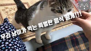 [고양이 vlog] 귀리, 고양이가 좋아하는 것
