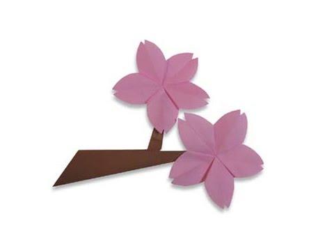 Cách gấp, xếp cành hoa anh đào bằng giấy origami - Video hướng dẫn