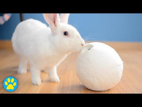 DIY Treat Ball For Small Animals