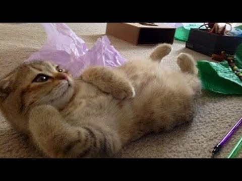 VIDEO OF FUNNY ANIMALS – ULTIMATE FUNNY COMPILATION