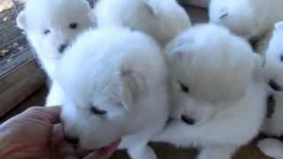 撮影日2014年10月18日 アライ畜犬牧場 http://www.araichikuken.com.