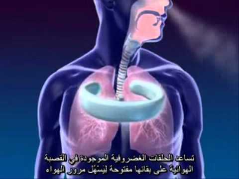 التنفس و الجهاز التنفسي...... Respiratory system