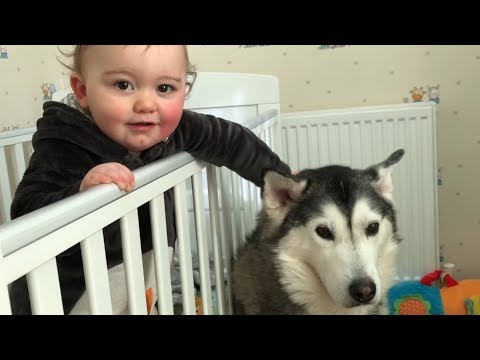 Only my Husky can stop my Baby from crying!!