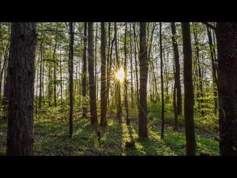 [ASMR] Sunset Woods - Relaxing Nature sounds