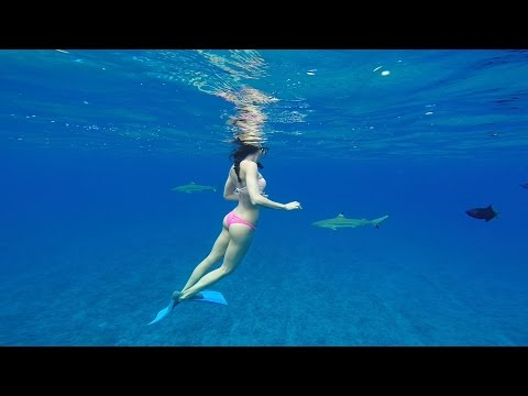 swimming-with-sharks-in-bora-bora-with-gopro-hero3+