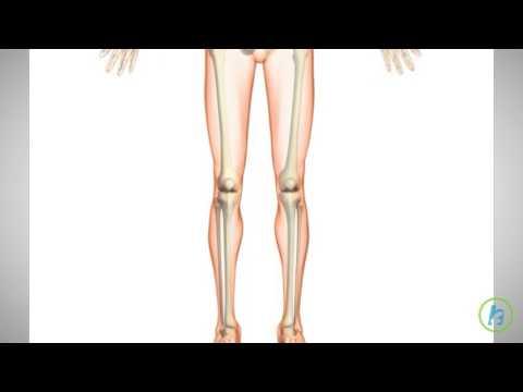 Ultrasound Can't Heal Broken Bones, New Study Suggests