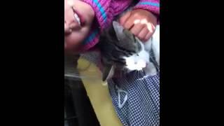 Katten molle halsar kunder valkomna till matbutiken