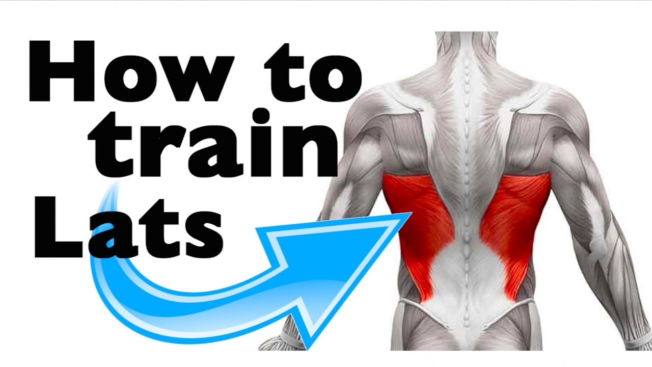How to: Train the Latissimus Dorsi (11 gym exercises ...