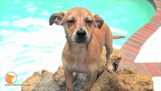 Naples Florida Dog Training - Swimming And Confidence Building For Dogs