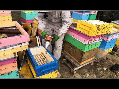 Весенние работы на пасеке,один день из жизни пчеловода. #beekeeping