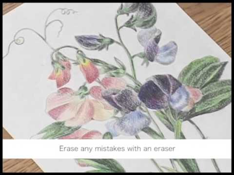 Nuri-e How to color by colored Pencils no.5/5 大人の塗り絵の塗り方