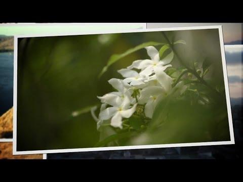 Nikon School: Nature Photography Tips