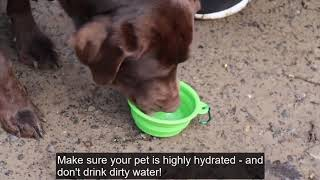 Papani Collapsible Outdoor Silicone Foldable Pet Travel Dog Bowl