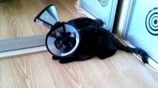 Кот и воротник