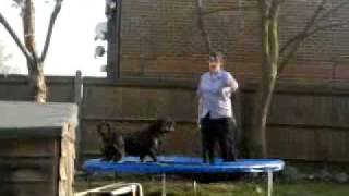 Me&our Rottweiler On The Trampoline :')