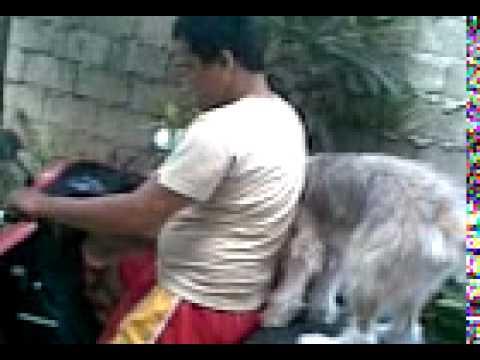 Bhogart olmoguis my belove dogs