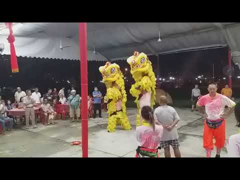 Singapore Jin Heng Lion Dance Cai Qing Performances at AMK Temple on Day 15 of CNY 2/3/18