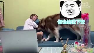 Những chú Chó Mèo🐶😻 đáng yêu vô cùng | Tik Tok Chó Mèo #3