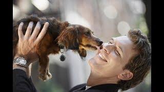 Разве собака нечистое животное?!  Христианское отношение к собаке