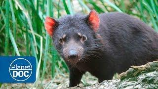 Tasmania Full Documentary | Devils & Tigers