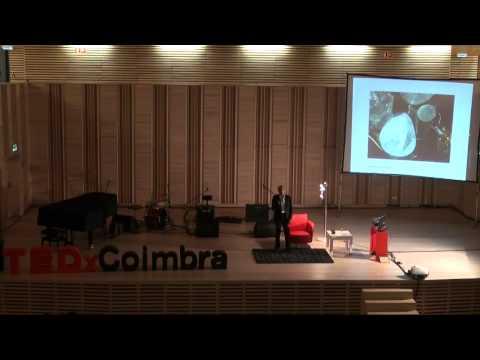 A mente que mente. Ilusão mental e des-ilusão meditativa: Paulo Borges at TEDxCoimbra