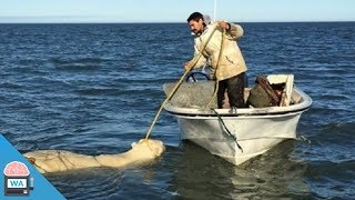 Als ein Inuit diesen ertrinkenden Eisbären entdeckte, reagierte er sofort…