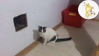 ЛУЧАНО. Маленький Котик Очень не Хотел Жить в Клетке