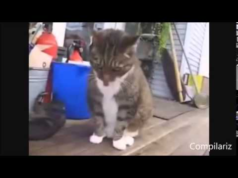 Dancing Cats Compilation avi