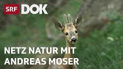 Magische Momente aus 30 Jahren NETZ NATUR | Andreas Moser | Doku | SRF DOK